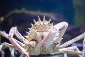 Big crab — Stock Photo