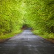Road in the tree tunnel — Stock Photo