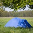 Blue tent under the tree — Stock Photo