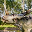 Stock Photo: Styracosaurus albertensis