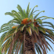 Palm tree — Stock Photo #2027973