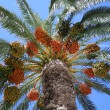 Palm and the blue sky - Stock Photo