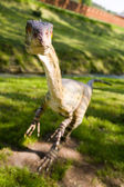 Coelophysis bauri — Stock Photo