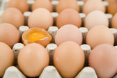 Plenty of eggs — Stock Photo