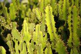 Plenty of thorns — Stock Photo
