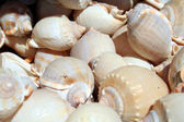 Plenty of snail shells — Stock Photo