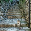 Cat on the stairs — Stock Photo