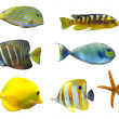 Tropical world of fish — Stock Photo