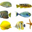 Tropical world of fish - Stock Photo