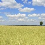 Grain ant the blue sky — Stock Photo