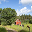 Old swedish farmhouse - Foto Stock