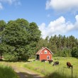 Old swedish farmhouse — Foto de Stock