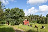 Old swedish farmhouse — Stock Photo