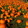 Pumpkin Patch — Stock Photo #2090000