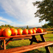 Pumpkins On A Bench — Stock Photo