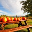 Pumpkins On A Bench — Stock Photo #2090079