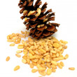 Pine Nuts - Foto de Stock  