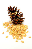 Pine Nuts — Stock Photo