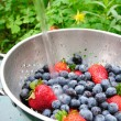 Blueberries And Strawberries — Stock Photo #2129802