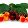 Bing And Rainier Cherries - Stock Photo