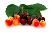 Bing And Rainier Cherries — Stock Photo