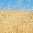 Wild Grasses Blowing In The Wind — Stock Photo #2191679