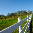 White Wooden Fence And Vineyard — Stock Photo #2191772