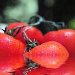 Постер, плакат: Wet Tomatoes