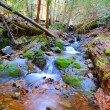 Peaceful Mountain Stream — Stock Photo