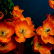 Stock Photo: Orange Perennial Flower