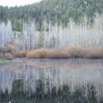 reflexión de invierno — Foto de Stock   #2225701