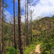 Hiking in a forest on Madeira — Stock Photo