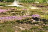 Jeotermal alanı haukadalur — Stok fotoğraf