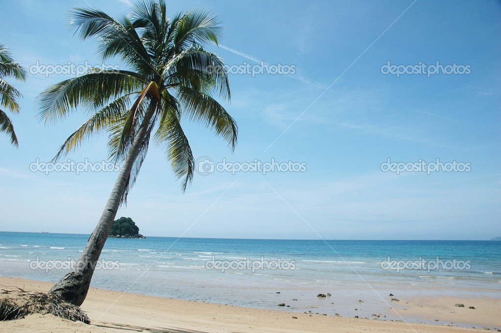 Palm tree on a sandy tropical beach — Stock Photo #2066246