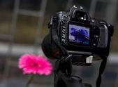 Camera and flower — Stock Photo