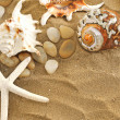 Shells and stones on sand — Stock Photo #1939562