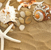 Shells and stones on sand — Stock Photo