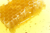 Honeycomb detail — Stock Photo