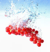 Red currants in water — Stock Photo