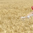Girl on wheat field - Stock Photo