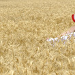 Girl on wheat field — Stockfoto