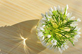 Snowdrops in a vase — Stockfoto