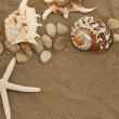Shells and stones on sand — Stock Photo #2201100