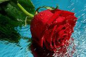Bellezza rosso rosa con acqua — Foto Stock
