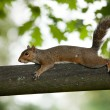Squirrel — Stock Photo #2048810
