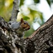 Squirrel — Stock Photo #2051463