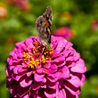 Butterfly on Flower — Stock Photo #2062390