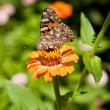 Butterfly on Flower — Stock Photo #2062436