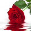 Red Rose — Stock Photo #2071950