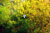 A soap bubble over blurred background — Stock Photo